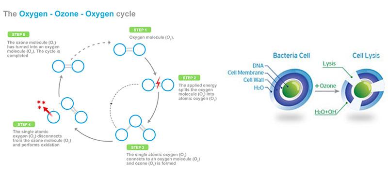 oxygen-ozone-oxygen-cycle